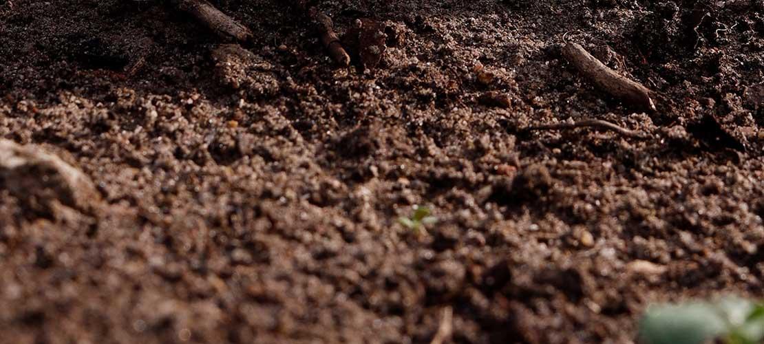 węgiel organiczny w glebie kwasy humusowe