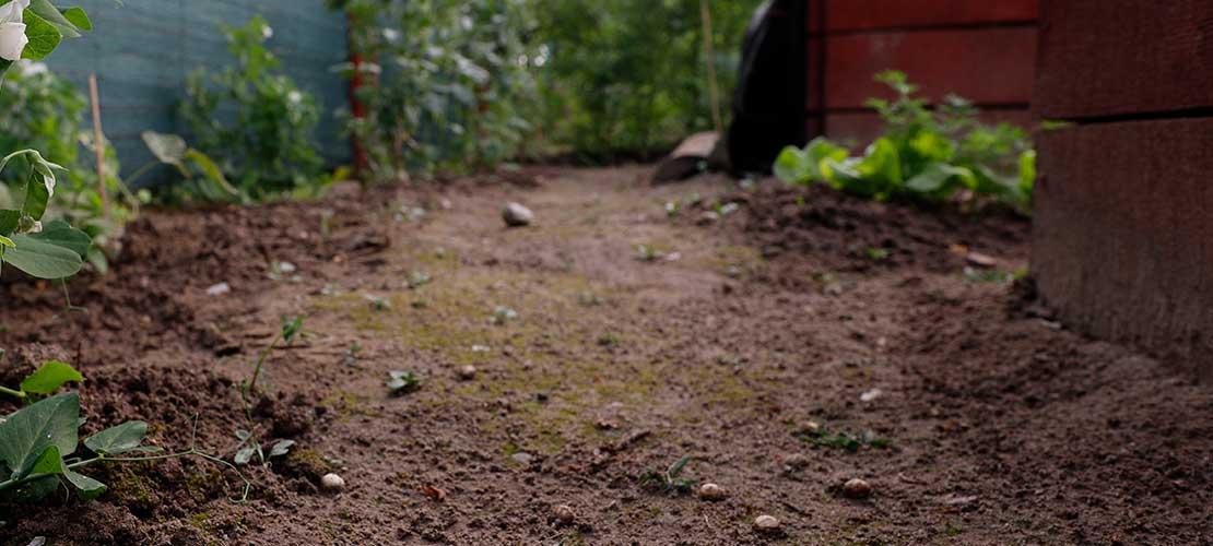 kwasy humusowe w ogrodzie